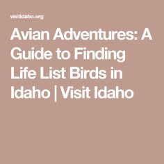 Avian Adventures: A Guide to Finding Life List Birds in Idaho | Visit Idaho