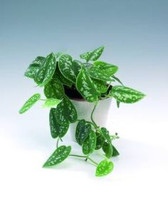 How to Do Indoor Gardening - Urban Gardening Plant Design, Garden Design, Small Japanese Garden, Beautiful Interior Design, Green Life, Green Plants, Plant Decor, Gardening Tips, Indoor Gardening