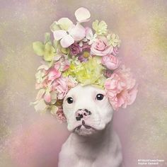 'Pit Bull Flower Power' Already Found Homes For 140+ Pits (New Pics) | Bored Panda
