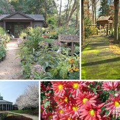 McGill Rose Garden, Charlotte, NC | Charlotte And NC | Pinterest | Charlotte  Nc
