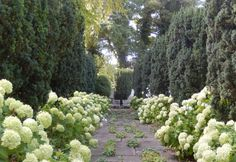 Simple with major impact. A hedge-lined walkway planted with Hydrangea arborescens (we'd use Incrediball: http://emfl.us/g_Jd) and lady's mantle.
