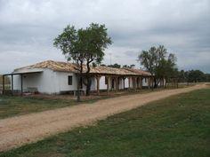 Amanita (Soria)