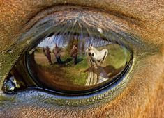 Se demande t-on ce que le cheval pense de son cavalier ? / Reflection in horse's eye.