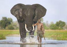 An African Elephant - Abu Elephant Camp. African Elephant, African Animals, African Safari, African Men, Elephant Camp, Elephant Love, Bull Elephant, Beautiful Creatures, Animals Beautiful
