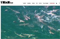 Mar lotado de tubarões assusta e adia competição na Austrália Ocidental #globoesporte