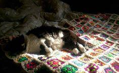 Phoebe fluff enjoying the Spring sunshine from the comfort of her bed :-) #catsofinstagram #catsofig #catstagram #fluffycat #sunshine #beautifulcat #blackandwhitecat #crochet #handcraftedblanket #crochetblanket #grannysquares by misscerimai