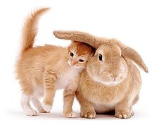 Królik domowy - Zanim będziesz mieć królika w domu - GardenPet Blog