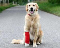 Cruciate+Ligament+Injury+in+Dogs:+Treatment+options