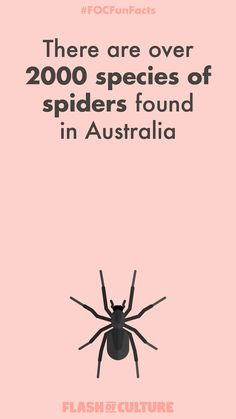 Today's will make you feel a little squeamish 🕷🕸 There are over 2000 species of spiders found in Australia 😱 Australia Fun Facts, Australia For Kids, Aussie Australia, Perth Australia, Western Australia, Australian Slang, Australian Animals, Australian Insects, Fun Facts For Kids