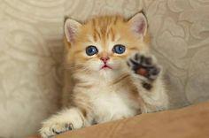 Cats and Kittens (@catsnkittys) | Twitter