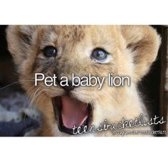 Bucket List / Pet a baby lion