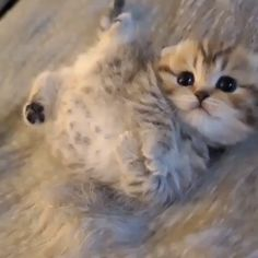 cute cate OF the world Who doesn't love petting a cute cat, or cuddling with an adorable kitten? While every feline is fetchin. Cute Baby Cats, Cute Cats And Kittens, Cute Funny Animals, Cute Baby Animals, Kittens Cutest, Animals And Pets, Funny Cats, Baby Kitty, Pet Cats