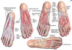 Wellness Bites: Training the foot (and what happens when you do trigger point work daily)