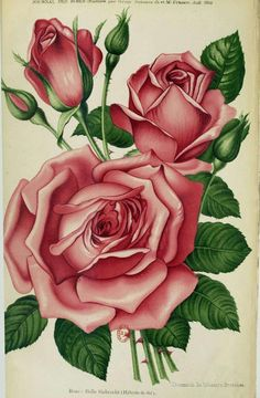 Discover recipes, home ideas, style inspiration and other ideas to try. Botanical Flowers, Flowers Nature, Botanical Prints, Beautiful Rose Flowers, Flower Phone Wallpaper, Flower Tattoo Designs, Arte Floral, Vintage Flowers, Quilling