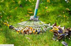 Early Spring Lawn Care Tips Are you unsure of what to do for your lawn in the early spring? Knowing what to do with your lawn as spring takes over from winter will help you grow an extraordinarily. Fall Lawn Care, Lawn Care Tips, Lawn Care Companies, Lawn Service, Pergola Pictures, How To Make Smoothies, Yard Care, Organic Fertilizer, Green Lawn