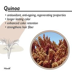 Quinoa | This ingredient is a complete protein containing all eight essential amino acids and has a strong affinity with the hair fiber. As one of the main ingredients of The Origin Color it has shown to increase color uptake and enhance color retention. Rich in antioxidant and regenerating properties it restores and protects hair structure shine elasticity and vitality!  . . . #nooksg #nook #nooksingapore #slesfree #parabenfree #slsfree #sulfatefree #parabenfree #nicrcotested… Complete Protein, Protective Hairstyles, Hair Health, Amino Acids, Nook, Quinoa, Anti Aging, Fiber, Strong