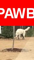 Please spread the word! Whitehuskeydog was last seen in Newport News, VA 23606.  Description:  All White Huskey Dog is lost in Deep Creek Rd Area (Newport News). Probably 60-70 lbs, male, tall but lean, blue eyes (or light colored), scared and lost (possibly abandoned)  Nearest Address: Deep Creek Rd and Normandy Ln