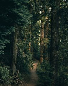 Far far away I find peace in the middle of nature , my soul is naked and I feel safe because the trees enclose me with their arms of branches Beautiful Forest, Beautiful World, Beautiful Places, Magic Forest, Deep Forest, Forest Path, Nature Pictures, Belle Photo, Beautiful Landscapes