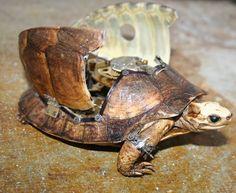 clockwork turtle from lisablackcreations.com