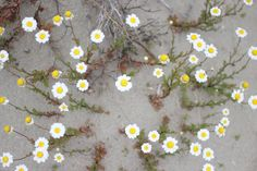 Sessùn - Sessùn Oui 2017 : Behind the scene Spring Time, Behind The Scenes, Plants, Dreams, Happy, Marseille, Ser Feliz, Plant, Planets
