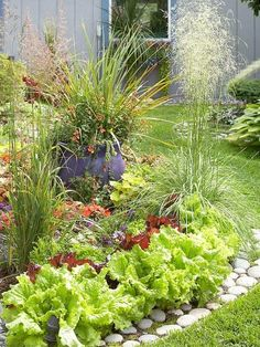 Salat, Blumen, Gräser