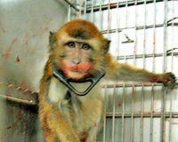 Stop the atrocities at the baby monkey lab at the University of Washington and shut it down for good