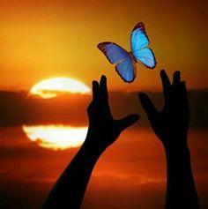 love isea rainbows butterflies sunsets rosesea