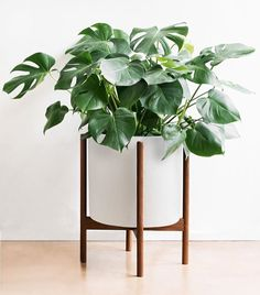 Spring into spring with these casestudy planters by modernica via themodernshopottawa- made, usa, planters Posted to Souda's Tumblr From the Pinterest Board: Plants! - Freestanding & Hanging Planters,...