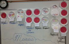 A model of meiosis made from foam plates, pipe cleaners, red construction paper, and a sharpie marker.