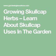 Growing Skullcap Herbs – Learn About Skullcap Uses In The Garden