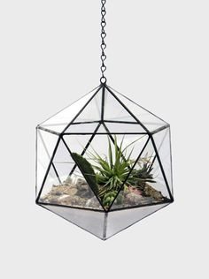 Bring a little life into any room.  Terrarium by Score & Solder