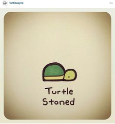 Turtle stoned Pet Turtle, Tiny Turtle, Turtle Love, Emoji Drawings, Kawaii Drawings, Animal Drawings, Sweet Turtles, Cute Turtles, Baby Turtles