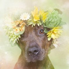 http://www.sophiegamand.com/#/flowerpower/