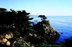 One of my favorite drives is along California Highway 1. The scent of rosemary, evergreens and the ocean is like bottled up shampoo!  This drive stimulates my sense of smell and sight.  Love it!