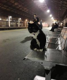 Felix the Train Station Cat Gets Promoted - We Love Cats and Kittens