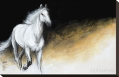 Light and Dark Stretched Canvas Print by Milenko Katic - at AllPosters.com.au