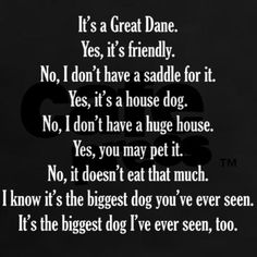 Great Danes...owning one means answering these questions everytime you go out!!! I miss My Midget and Laney girl!