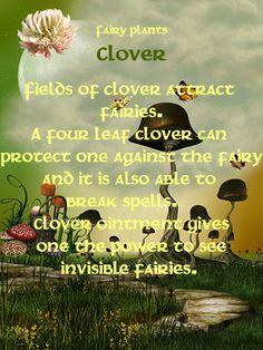 Fairy Plants - Clover