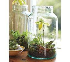 Today we look at ways to make your very own unforgettable bonsai terrarium plants. The picture Bonsai Terrarium plant here offers you a sense of the scale, and we're sure you want to have it for your home decor. Garden Plants, Indoor Plants, House Plants, Small Plants, Plants In Jars, Fruit Garden, Indoor Cactus, Nature Plants, Tropical Garden