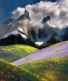 Wildflower valleys in view of the Los Cuernos (horns) of the Andes Mountains in the Patagonia (Chile)