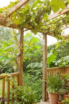 "In a forest garden, edible perennials are planted together to echo the layers of a forest: canopy, vines, shrub layer and ground cover. Lia's garden planning began with a decisive structure: a circular lawn and straight paths edged in box, and a raised veranda. The lawn stood in for the forest clearing, the veranda replaced taller trees to support big vines; the ""forest garden"" was confined to four curved and edged beds."