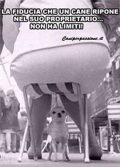 Ahi ahi non si rende conto che potrebbe diventare una frittatina. Dont Forget To Smile, Just Smile, Funny Test, Funny Cute, Funny Animals, Cute Animals, Italian Quotes, Me Too Meme, Funny Clips