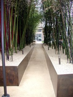 I'd love to use this kind of planting on a residential scale. Great way to create an allee or screen while containing the bamboo. Very modern, very cool.