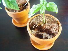Chocolate Garden (Gluten, Dairy & Refined Sugar Free and Paleo)   #HungryCub
