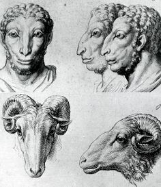 Comparing a ram to a human. Great for designing the faces of faun/satyrs.