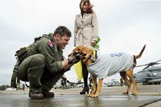 U.S. Navy Lt. John Geary pets his dog during a homecoming celebration on Naval Air Station Atsugi, Japan, Nov. 19, 2012. Geary is assigned to Helicopter Anti-Submarine Squadron 14, which completed a deployment aboard the aircraft carrier USS George Washington. U.S. Navy photo by Petty Officer 2nd Class Justin Smelley