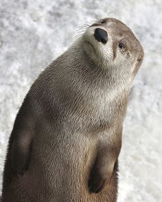 Otter..... We'd love you to come and join us on Facebook :) https://www.facebook.com/bewilderbugspage