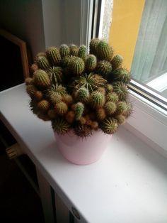 #kaktus :-)