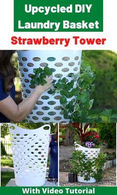 Growing Plants, Growing Strawberries, Strawberry Planters, Hydroponic Gardening, Planters, Garden, Amazing Gardens, Plants, Urban Garden