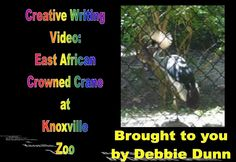 Creative writing video: East African Crowned Crane at Knoxville Zoo